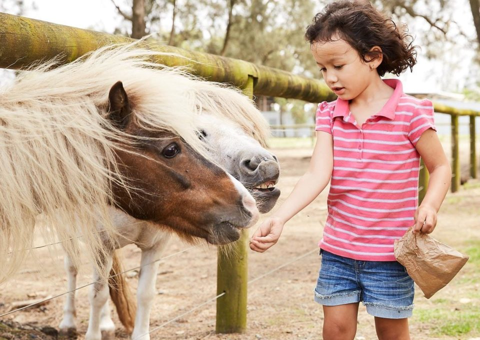 Miniature Pony | Oakvale Wildlife