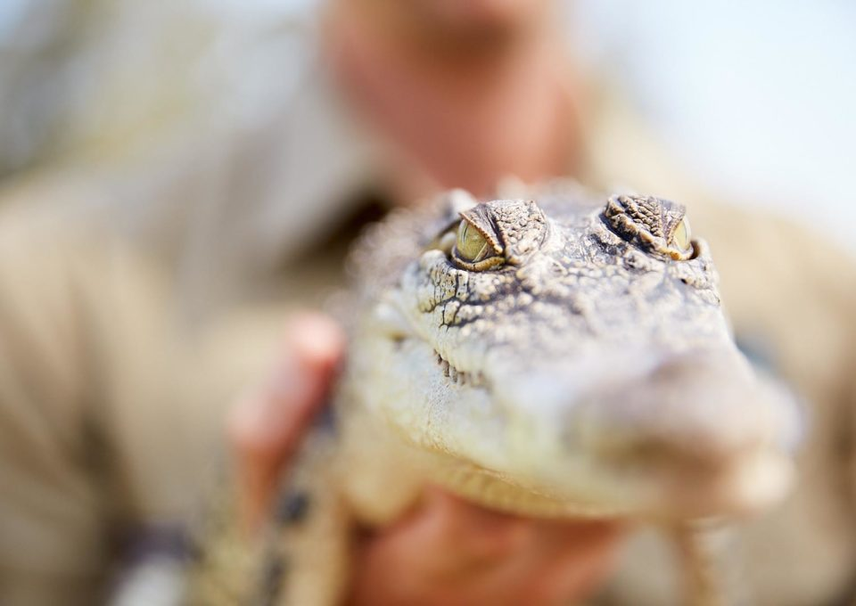 Reptile Ravine | Oakvale Wildlife