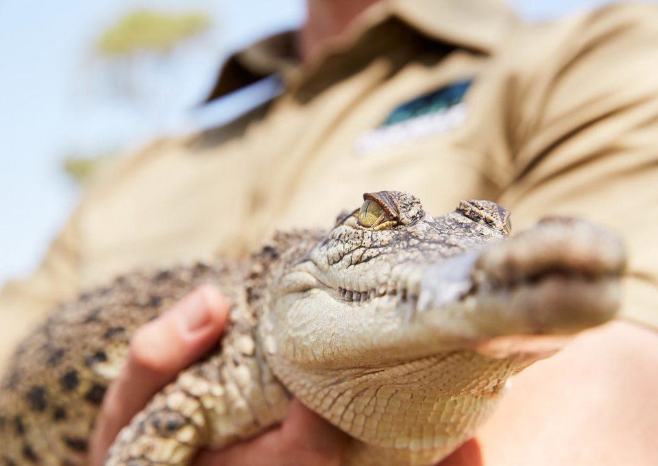 Volunteering | Oakvale Wildlife