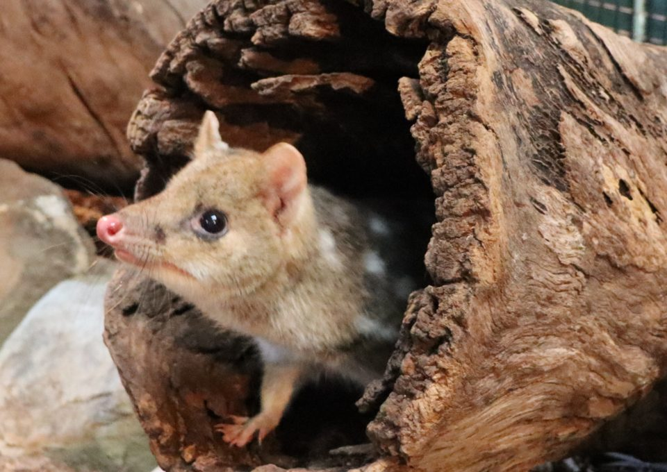 New Animal Encounter! | Oakvale Wildlife