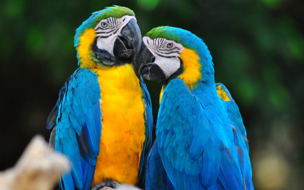 Blue and gold macaw | Oakvale Wildlife