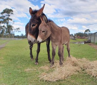 OAKVALE WILDLIFE PARK REOPENS TO THE PUBLIC | Oakvale Wildlife