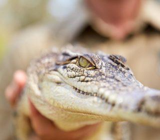Reptile Show & Patting | Oakvale Wildlife