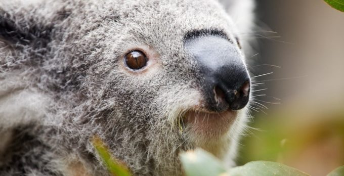 Koalaty Fun Day Out Package