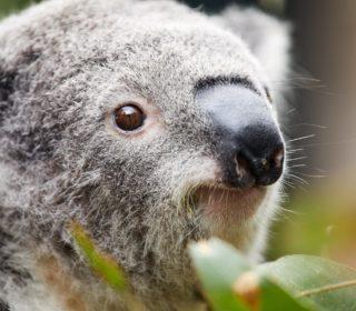 New website launches! | Oakvale Wildlife
