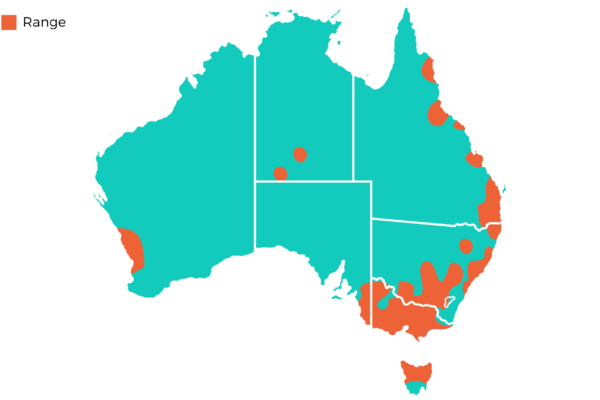 Oakvale Distribution Maps png Long Billed Corella